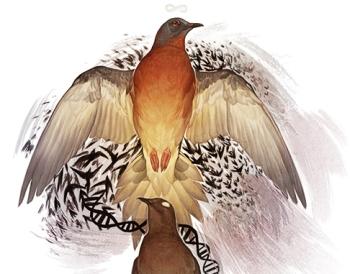new_pigeonsjustinethumb
